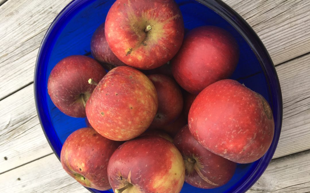 Tips till dig som har mycket äpplen i trädgården